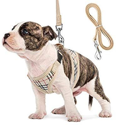 Amazon Com Dog Harness And Leash Set Adjust Mesh Dog Harness For Small Dogs Chihuahua Lightweight Mesh Cat Harnes Small Dog Harness Cat Harness Dog Harness
