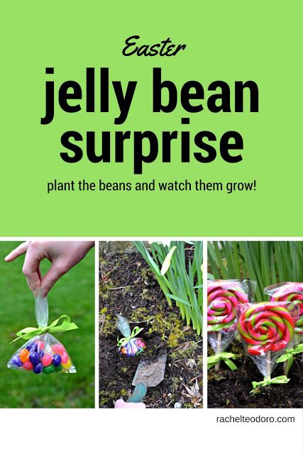 easter jelly bean surprise plant a bean and watch it grow #easter #kidscrafts #diy #howto #kidsactivities