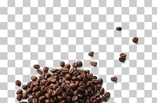Coffee Bean Cafe Botanical Illustration Arabica Coffee Png Clipart Arabica Coffee Basil Beans Botanical Illustra Coffee Beans Cappuccino Cafe Green Coffee