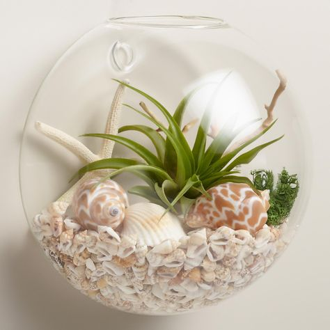 Cost Plus World Market Wall-Mounted Live Plant Glass Terrarium Mini Terrarium, Wall Terrarium, Terrarium Containers, Air Plant Terrarium, Glass Terrarium Ideas, Plant Wall, Plant Decor, Hanging Glass Planters, Hanging Plants