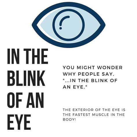 Don't blink you might miss this fast fact. #FactFriday #FunFriday #EyeFacts #HumanBody