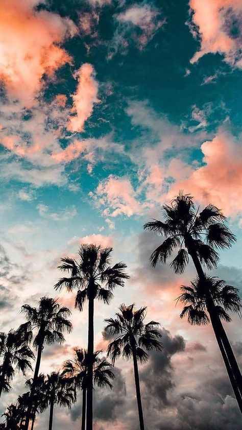 Blue sky with clouds, tall palm trees, aesthetic iphone wallpaper amazingly cute backgrounds to grace your screen