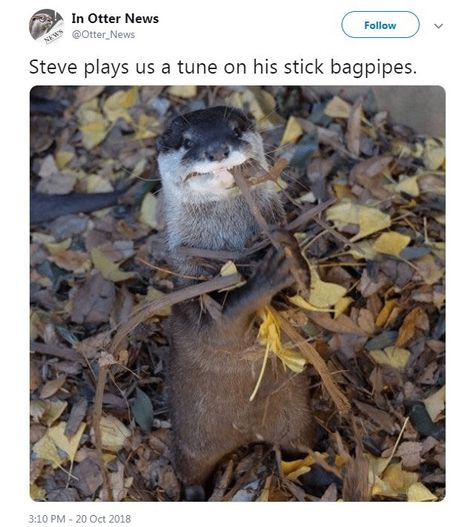 17 Funny Tweets From Steve The Otter Funny Animals Daily Lol Pics Otters Funny Otters Funny Animals