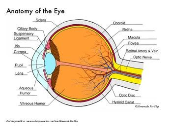Anatomy Of The Eye Diagrams For Coloring Labeling With Reference And Summary Eye Anatomy Diagram Human Eye Diagram Eye Anatomy