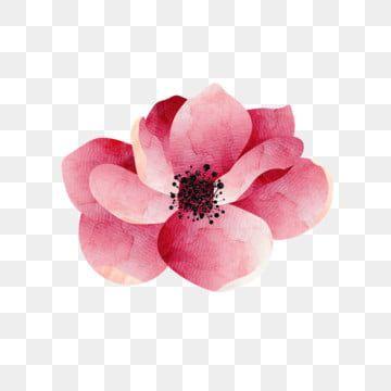 رسمت باليد الزهور الوردي روز زهرة نبات ألوان مائية Png والمتجهات للتحميل مجانا Flower Painting Rose Hand Painted