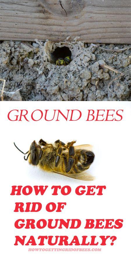 Ground Nesting Bees: 10 Best Ways to Get Rid of Ground Bees