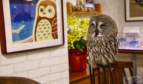 كافيه البومة يعتبر من أفضل وأغرب مطاعم العالم Animals Unusual Owl