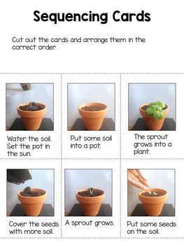 Procedural Writing How To Plant A Seed In 2020