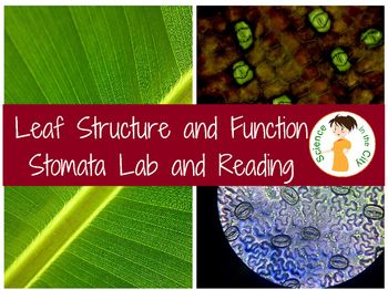 Leaf Structure Stomata Lab One Version Is A More Traditional Lab