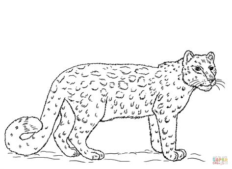 Snow Leopard Coloring Page Free Printable Coloring Pages Library