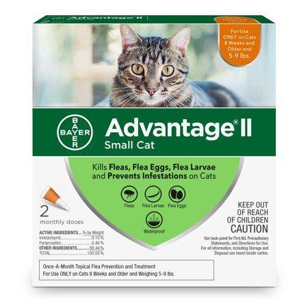 Pets Cat Fleas Flea Prevention For Cats Fleas