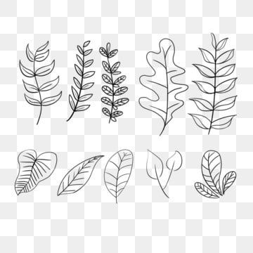 Line Graph Leaves Leaf Decoration Leaf Clipart Hand Painted Black And White Png Transparent Clipart Image And Psd File For Free Download Leaf Clipart Watercolor Flower Illustration Leaf Decor