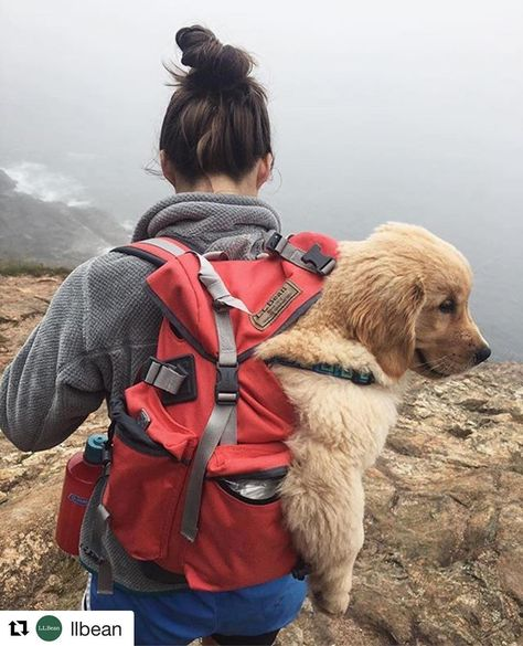 Thanks for sending @laurendeloachinteriors 💚🐶💚 So excited about our new project together!! #Repost @llbean (@get_repost)  ・・・  Adventuring with that friend who's always got your back. (Photo: @the___goldengirls) #LLBeanMoment #LLBeanPets