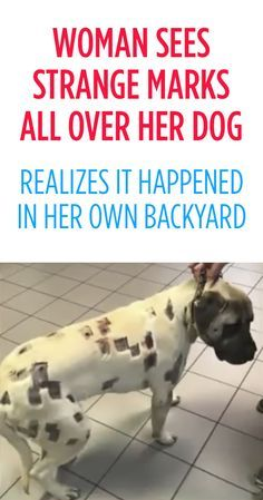 This poor dog. This makes me sick.