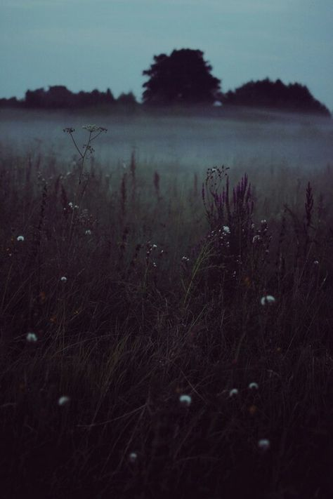New Nature Pictures Trees Mists Ideas Nature Architecture, Beautiful Places, Beautiful Pictures, Slytherin Aesthetic, Dark Photography, Aesthetic Photography Nature, Morning Photography, Photography Flowers, Landscape Photography