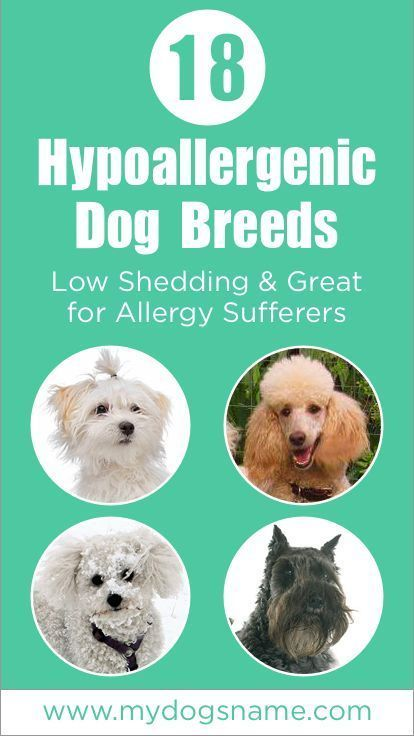 Pin On Cat Breeds Hypoallergenic