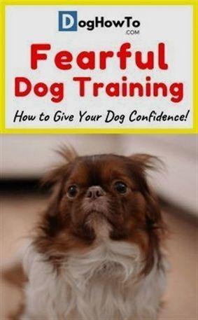 Therapy Dog In Training Dog Training Workshop Dog Training