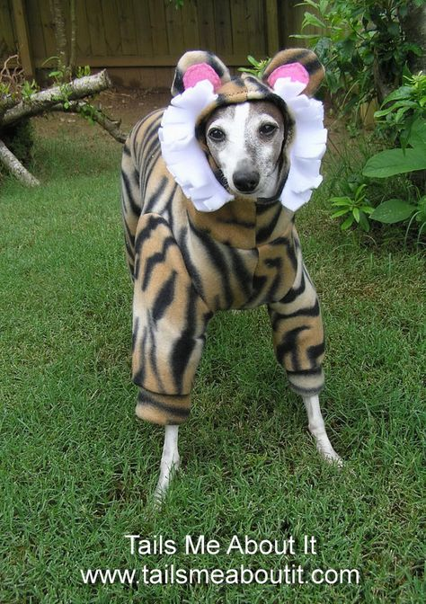 Tiger Dog Costume Halloween Costume Italian Greyhound Chinese