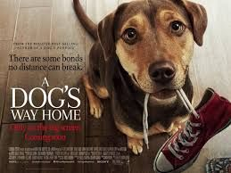 Watch Online Movie A Dog S Way Home 2019 Hindi Dubbed Dog Movies A Dogs Purpose Home Movies