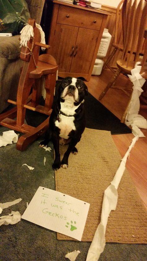 Dog Shame | I swear it was the Geckos. Max