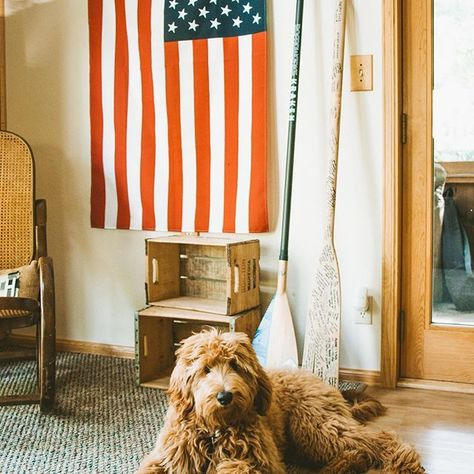 The fluffiest of all the fluffernuggets 🙌  .  .  .  #goldendoodle #goldendoodlesofinstagram #redroyalgoldendoodles #rrgfamily #doodlesofinstagram #cabinlife #cabinfever #cabininthewoods #eddiebauercanineclub    #Regram via @CC9w8ccpOVI
