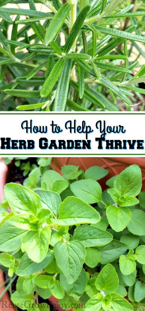 List of Pinterest gardening herb ideas design images & gardening