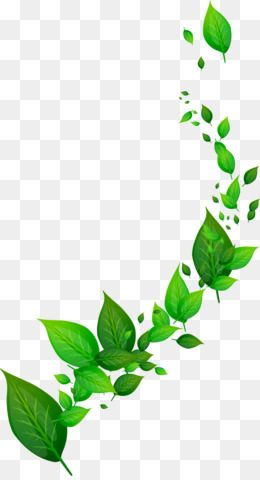 Border Green Border Poster Border Frame Creative Border Fresh Lace Hand Painted Border Png Transparent Clipart Image And Psd File For Free Download Cubiertas De Carpeta De Escuela Carpetas De Escuela