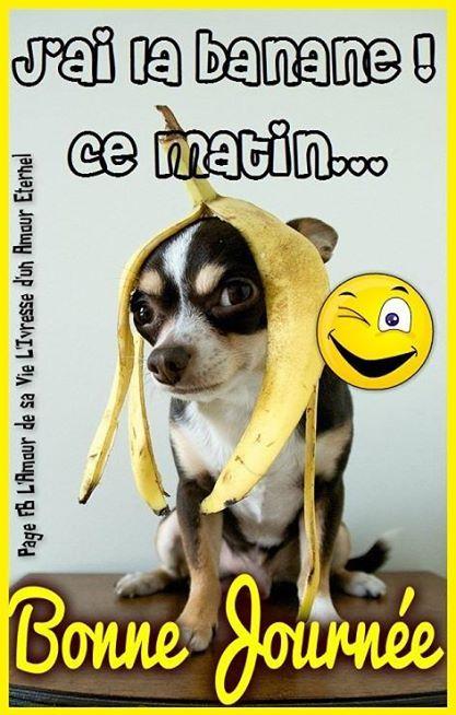 J Ai La Banane Ce Matin Bonne Bonne Journée Humour