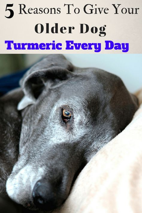 5 Reasons To Give Your Older Dog Turmeric Every Day Older Dogs