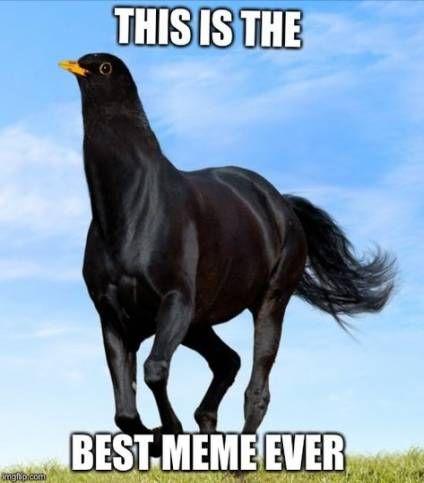 Bird Memes Clean 27 Ideas Funny Bird Pictures Horse Meme Pet Bird Cage