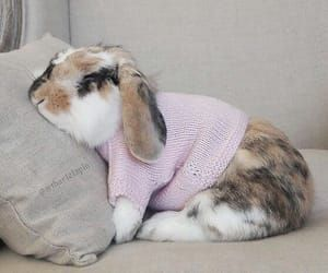 okay . no sweater on your bunnies talks ! but she is super cute and stylishly adorable , remember to remove sweater after photo shoot