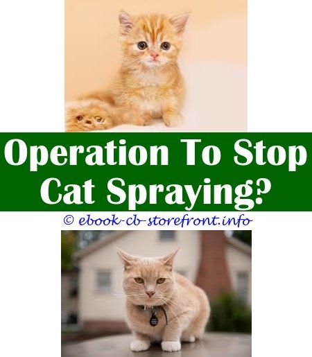 8 Persistent Cool Tips Keep Off Cat Repellent Spray Spray To Keep Cats From Pooping On Carpet How To Stop A Cat Spraying On My Furniture Black Cat Pepper Spray En 2020