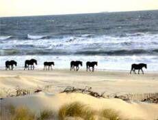 Sandbridge Beach Guide Virginia Va
