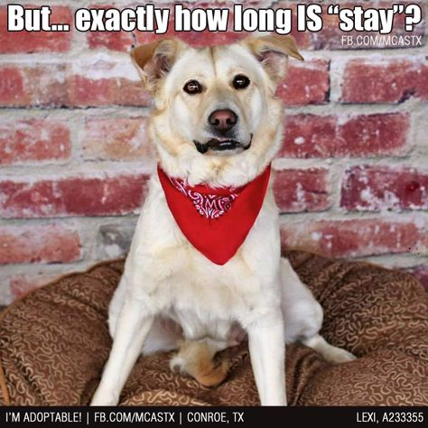 A Question For The Ages Funny Dogs Mcaspets Animal Shelter Animals Humane Society
