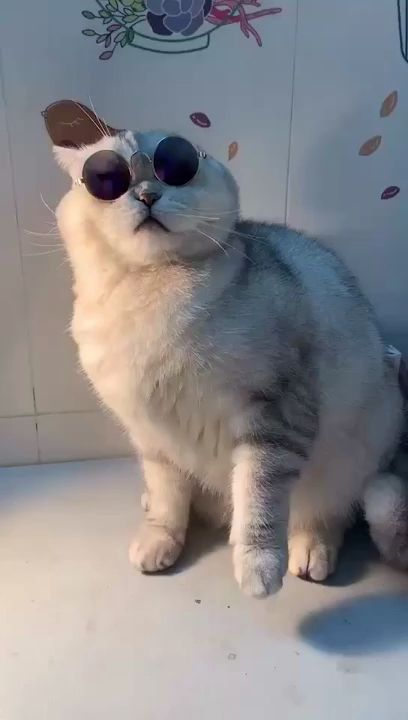 Cutest cat with sunglasses. Please follow Animals Board for more videos
