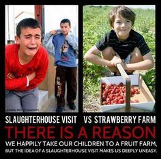 Vegan Truth... Food for thought! Visit to a strawberry farm vs a visit to the slaughter house. go vegan #vegan