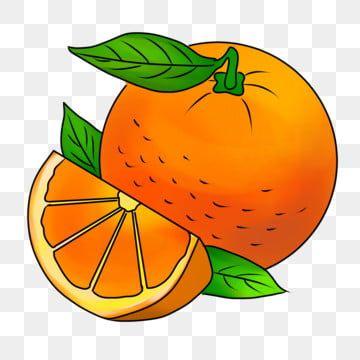كرتون خضار برتقال المنتجات الزراعية حصاد الزراعة مرسومة باليد توضيح الفواكه والخضار Png وملف Psd للتحميل مجانا Vegetable Cartoon Original Wallpaper Hp Android