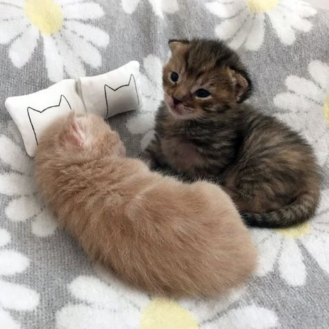 Dollhouse Cat Bed Pillows, Gift for Cat Lover, miniature animals, miniatures, miniature bedding dollhouse bed pillowcases kitten bedroom Cat Lover Gifts, Cat Gifts, Cat Lovers, Kittens Cutest, Cats And Kittens, Cute Cats, Funny Cats, White Kittens, Ragdoll Cats