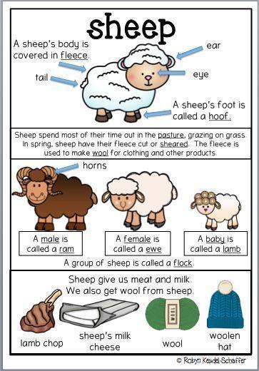 Farm Animals Theme Worksheets Sheep Pack Farm Theme Preschool Farm Preschool Farm Animals Preschool Preschool farm theme worksheets