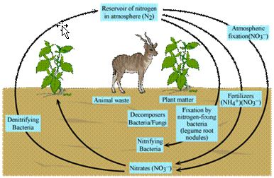Explain nitrogen cycle and carbon cycle with diagrams explain nitrogen cycle and carbon cycle with diagrams meritnation real farming pinterest ccuart
