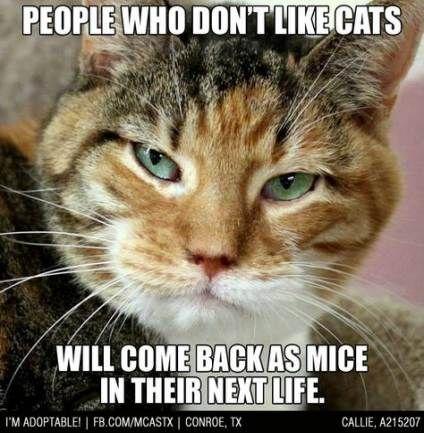 Super Funny Quotes Animals Cats Life Ideas Funny Cute Cats Funny Cats Cute Animal Quotes