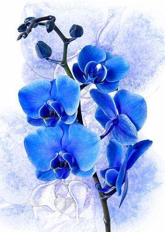 Pin Ot Polzovatelya Kwanchai Na Doske Vlye Orhideya Cvetochnye Kartiny Orhidei