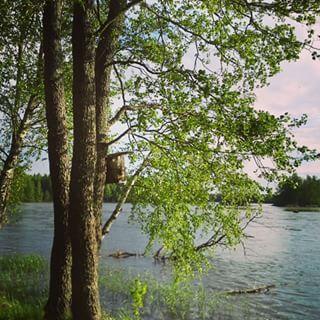 River Kymi Kymijoki Kymenlaakso Finland Nature Green Trees Landscape Scenery Beach Outdoors Instagram Landscape Scenery