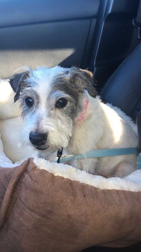 Adopt Terrier Mix - Beatrice 'Bea' on   TERRIER MY HEART OUT
