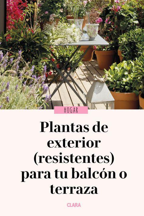 Plantas De Exterior Para Que Tu Balcon O Terraza Parezcan Un Jardin En 2020 Plantas De Exterior Plantas Exterior Resistentes Plantas De Patio