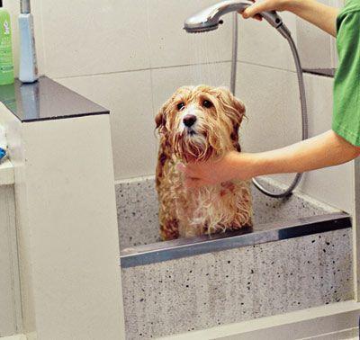 Dear Labby Why Does My Dog Go Crazy After Taking A Bath Dog Cleaning Dog Washing Station Dog Bath
