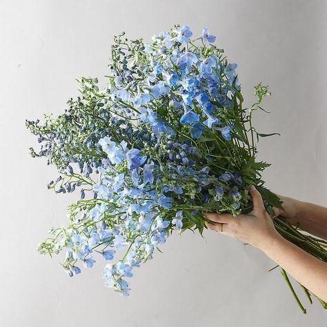 Baby Blue Aesthetic, Light Blue Aesthetic, Aesthetic Colors, Flower Aesthetic, Delphinium Bouquet, Blue Delphinium, My Flower, Beautiful Flowers, Flower Bouqet