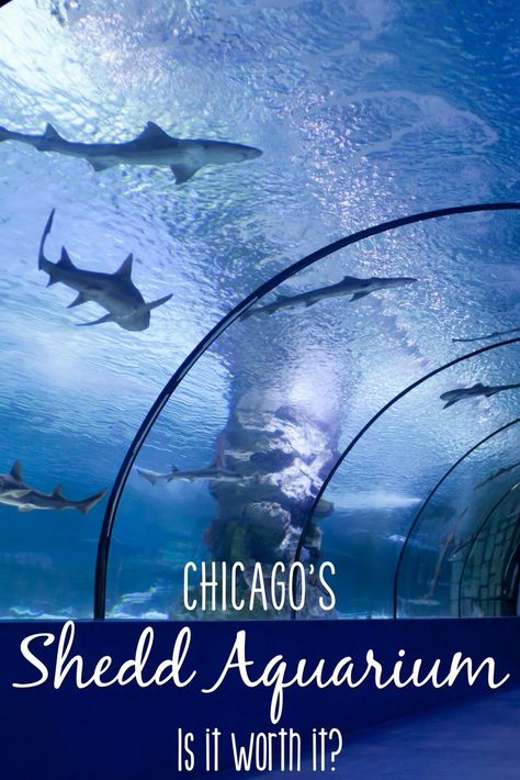 The Shedd Aquarium in Chicago is one of the oldest and most well-known aquariums in the country. With it's beluga whales, aquatic shows, traveling exhibits, and educational activities, it's definitely a neat place. But is the high price of admission at th
