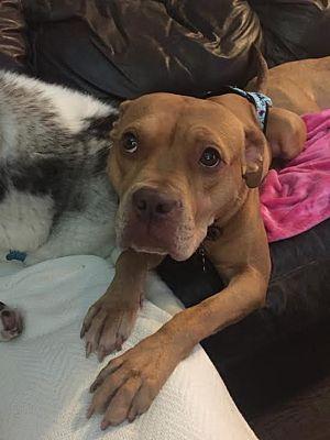 Detroit Mi Terrier Unknown Type Medium Meet Peanut A Dog For Adoption Dog Adoption Pets Pet Adoption