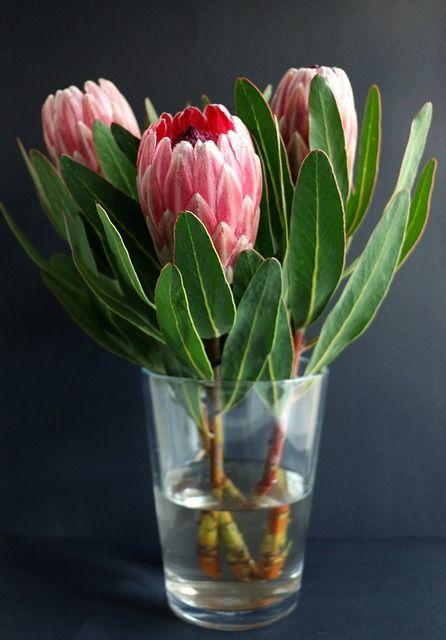 Free Image On Pixabay Protea Vase Flowers Plant In 2020 Protea Flower Beautiful Flowers Garden Balcony Flowers
